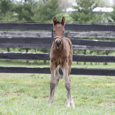 4.15.19_19 Wicked Tap - Algorithms Filly (1)